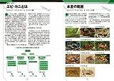 日本の淡水性エビ・カニ: 日本産淡水性・汽水性甲殻類102種 (ネイチャーウォッチングガイドブック) 画像