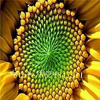 SEEDS PLAT会社 - ビッグセール美しいヒマワリの種、約50粒子の花の種