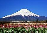 A3サイズミニポスター 富士山とチューリップ