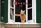 アサヒカメラ 2017年 12月号【特別付録】岩合光昭カレンダー「猫にまた旅2018」 [雑誌] 画像