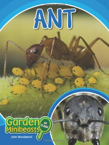 Ant (Garden Minibeasts Up Close)