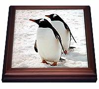 """鳥–Penguins–五徳 8 by 8"""" ブラウン trv_4182_1"""