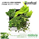 ミドリエデザイン 土を使わない壁掛け観葉植物(FRAMEホワイト17X4)