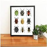 半H目昆虫のポスタープリント自然生物的壁装飾地中海地方の昆虫種キャンバス絵画60x80cm(枠なし)