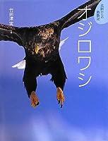 オジロワシ (北国からの動物記)