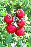 日本デルモンテアグリ トマト苗 めちゃなりトゥインクル+ぜいたくトマト 9cm苗 2本セット