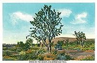 Nevada–モデルのビューのT Crossing the Desert through the Arrowhead Trail 36 x 54 Giclee Print LANT-25802-36x54
