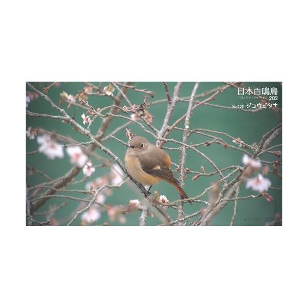 シンフォレストBlu-ray 日本百鳴鳥 2...の紹介画像21