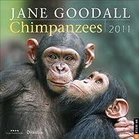 Jane Goodall Chimpanzees: 2011 Wall Calendar