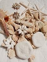 天然素材貝殻バラエティパック300g ヒトデ2P ホタテ1P サンドダラー2P シェルリング4P 巻貝 白サンゴ