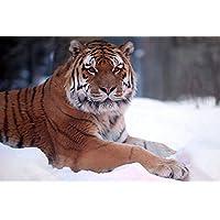雪の中の虎動物 - #20288 - キャンバス印刷アートポスター 写真 部屋インテリア絵画 ポスター 90cmx60cm