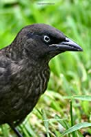 Brewer's Blackbird Journal