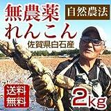 れんこん 無農薬 自然農法 2kg 佐賀県白石産