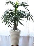 山久 光触媒加工 の パームツリー ポット 2534 1210-2764 テーブルヤシ 造花 観葉植物 シルクフラワー
