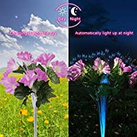dapai Solar Garden Lights Outdoor, LED Decorative Solar Flowers Stake Lights for Garden Yard Patio Lawn Path Decoration, Color Changing, 2 Pack (Pink & Purple) 141[並行輸入]