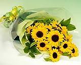 幸運を運ぶ大きなひまわり20本の花束 日時指定無料