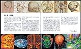 ブレインブック THE BRAIN BOOK みえる脳 画像