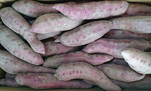 無農薬 紅はるか さつまいも サツマイモ 5kg 訳あり 土付き 熊本産