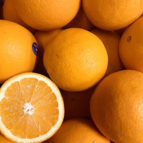 オレンジ 約18kg (72玉) 柑橘 フルーツ ホテル品質 果物 まとめ買い 家庭用 業務用 飲食店 朝食 モーニング 材料