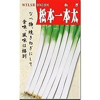 ネギ 種子 松本一本太葱 ねぎ (40ml)