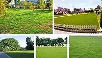 ブルゴーニュ:芝生種子500個草の種新緑ソフトランナー天然植物