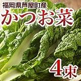 かつお菜 4束入 福岡県遠賀郡産 【年末日付指定】