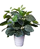 【ADOSSY】 観葉植物 インテリア 大型 人工 造花 グリーン ポット 癒し フェイク 鉢植え 葉 植物 お世話 いらず! (ホワイトメッシュ)
