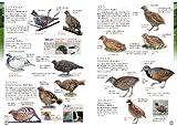 ♪鳥くんの比べて識別! 野鳥図鑑670 画像
