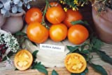 【PLANT】Heirloom Tomato Golden Jubilee エアルーム・トマト・ゴールデン・ジュビリー(9cmポット・自根苗4苗)