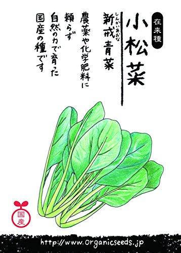 国産・自然農法(在来種)コマツナ新戒青菜
