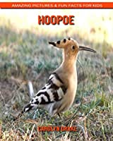 Hoopoe: Amazing Pictures & Fun Facts for Kids