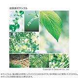 素材辞典 Vol.127 新緑と若葉編