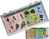 地球スペシャル標本 化石スペシャル標本 12種類