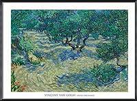 ポスター フィンセント ファン ゴッホ Olive Orchard 1889 額装品 アルミ製ハイグレードフレーム(ブラック)