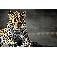 ジャガーの動物 - #19827 - キャンバス印刷アートポスター 写真 部屋インテリア絵画 ポスター 90cmx60cm