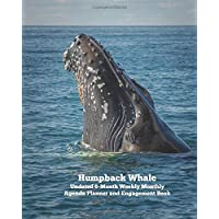 Humpback Whale Undated 6-Month Weekly Monthly Agenda Planner and Engagement Book