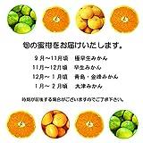 【 熊本県産 】蜜柑 温州みかん 訳あり ご家庭用 3S~Lサイズ (約10kg)