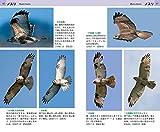 タカ・ハヤブサ類飛翔ハンドブック 画像