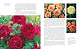 The English Roses: Classic Favorites and New Selections 画像
