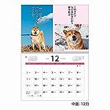 アートプリントジャパン 2019年 犬川柳 カレンダー vol.001 1000100938 画像