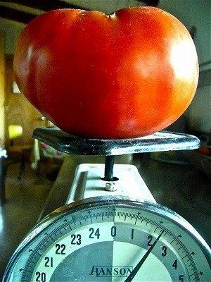 Luckyseed 超巨大トマト 種 24粒