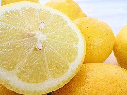 国産(和歌山県産)レモン/グリーンレモン 1kg 秀品 ノーワックス