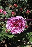 Contact met bloemen (Dutch Edition)