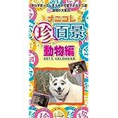 ナニコレ珍百景動物編 週めくりカレンダー2013