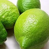 広島県尾道市瀬戸田町産   防腐剤・防かび剤不使用   ご家庭用 わけあり(規格外品)   レモン 5kg