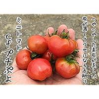 【てしまの苗】接木トマト/CFプチぷよ   9cmポット