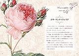 宮廷画家ルドゥーテとバラの物語 (青幻舎ビジュアル文庫シリーズ) 画像