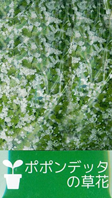 ポポンデッタの草花 「ホワイト」