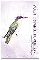 Tree-Free Greetings EcoNotes 12-Count Notecards with Envelopes 4x6 Inches Violet-crowned Hummingbird (66294) [並行輸入品]