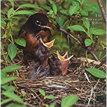 The American Robin: A Backyard Institution